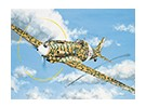 Italeri 1/72 Scale MC.202 Folgore Plastic Model Kit